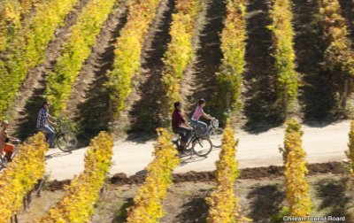 mountain-bike-winery-tour0