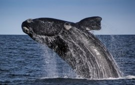 whale-watching-boat-trips0