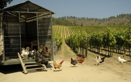 Matetic Vineyards chicken
