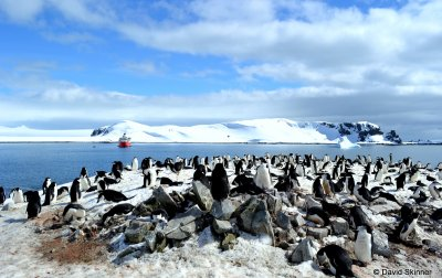 Frozen Land of Penguins