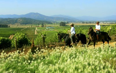 Chilean Wine Region 1