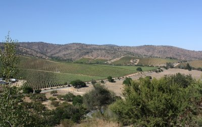 Chilean Wine Region 4