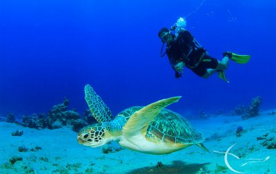 Galapagos Diving Tour