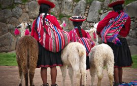 Peruvian girls and Alpacas