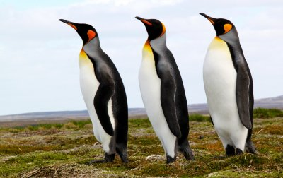 Kind Penguins