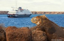 8 Day North & Central Galapagos