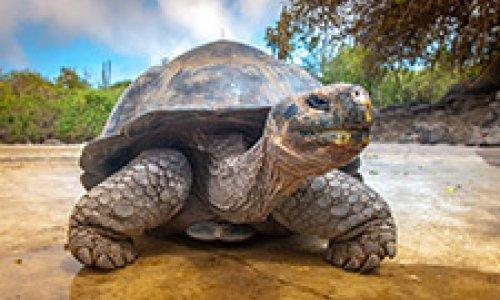 Découverte des Galapagos